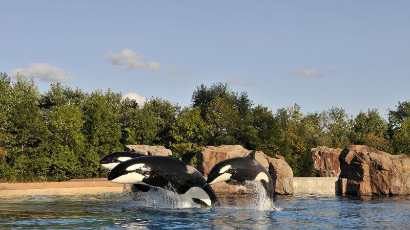 Canada-hoogtepunt-whalewatching (1)