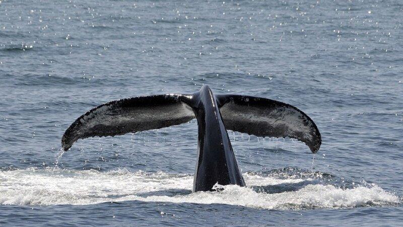 Canada-hoogtepunt-whalewatching (8)