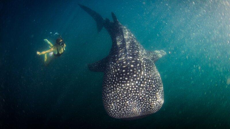 Comoren-Hoogtepunt1-Zwemmen met walvissen (2)
