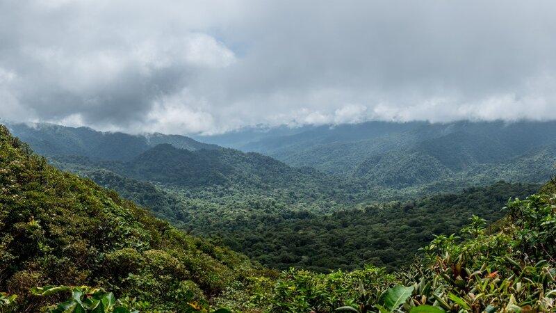 Costa Rica - Nevelwoud - Monteverde (5)