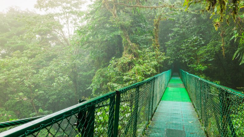 Costa Rica - Nevelwoud - Monteverde (6)