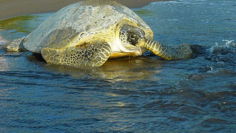 Costa Rica - schildpad