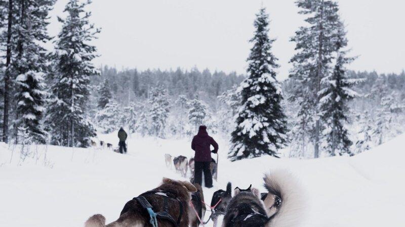 Finland-Zweden-Lapland-husky-safari 3