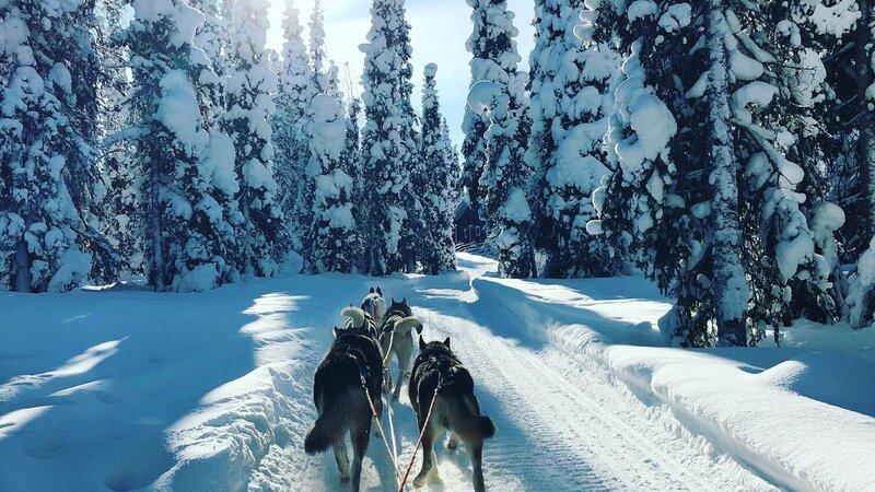 Finland-Zweden-Lapland-husky-safari 4