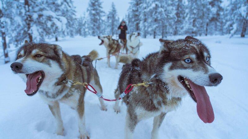 Finland-Zweden-Lapland-husky-safari 5