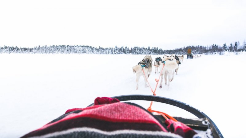 Finland-Zweden-Lapland-Levi-husky-safari