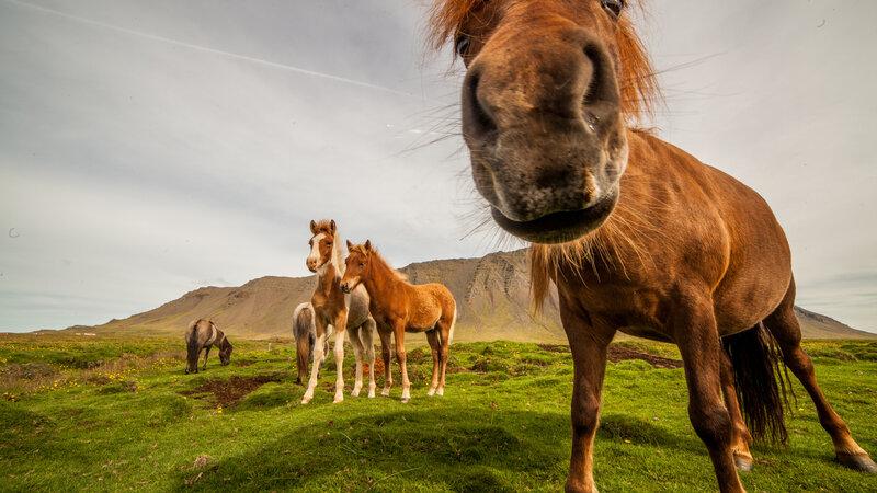 Amazing off the beaten track in IJsland met familie of vrienden