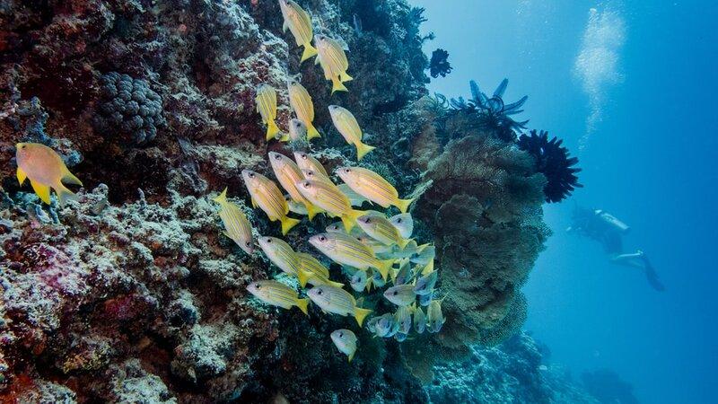 Indonesië-Gili-Eilanden-Excursie-snorkelexcursie-aan-de-Gili-eilanden-3