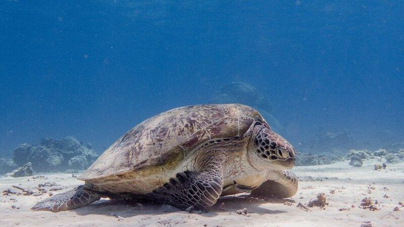 Indonesië-Gili-Eilanden-Excursie-Snorkeltrip-naar-de-zuidwestelijke-Gili's-vanuit-Lombok-3