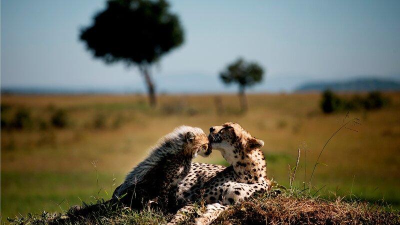 Privé safari rondreis Kenia