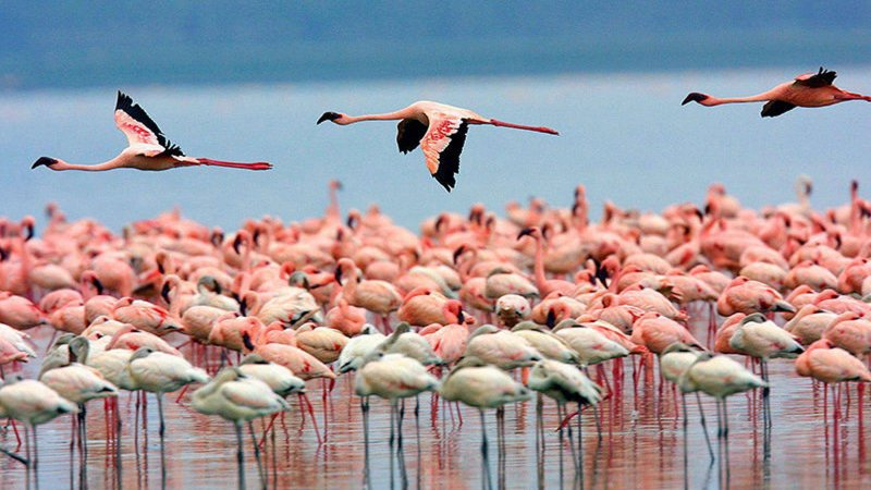 Kenia-Lake Nakuru-Flamingo Hill Tented Camp (1)