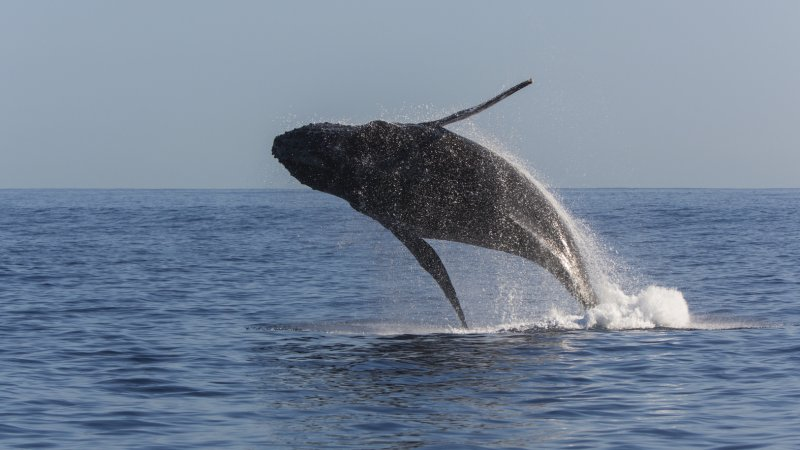 La-Reunion-westkust-excursie-cruise-walvis-CREDIT-IRT-lionel-ghighi