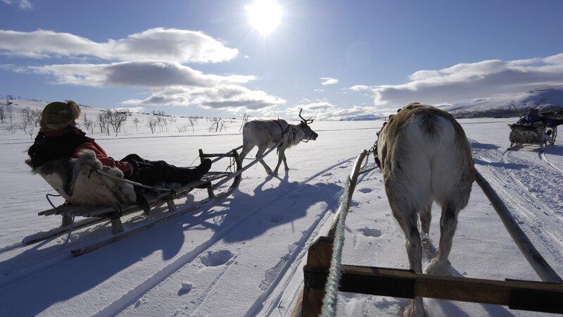 Lapland - Rendier - slee - sneeuw  (1)