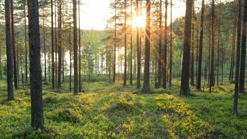Lapland-Zweden-Harads-Loggers-Lodge-omgeving-zomer