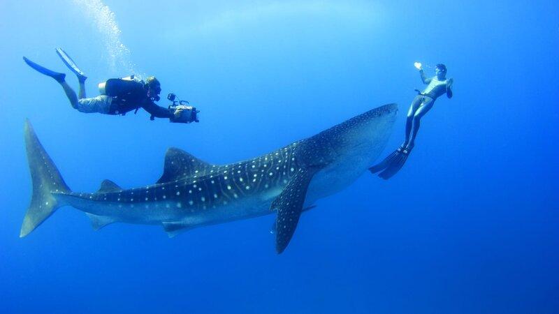 Malediven-Landaa-Giraavaru-Hotel-Four-Seasons-Resort-duiken