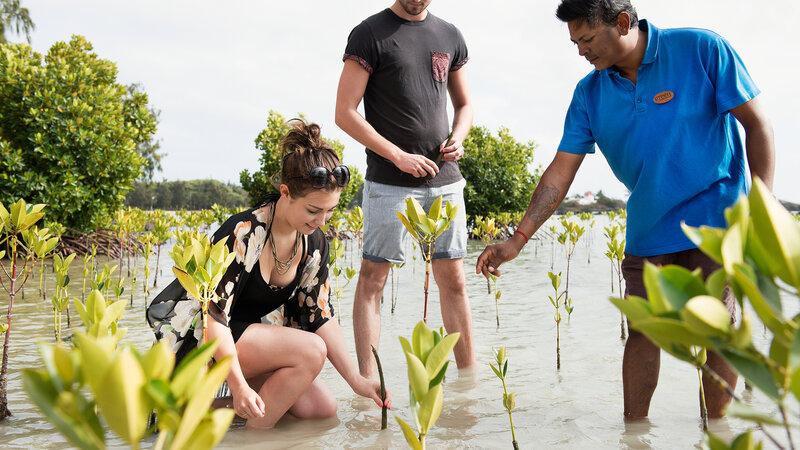 Mauritius-Attitude-Hotels-mangroveJPG