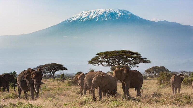 Amazing honeymoon in Kenia en de Seychellen