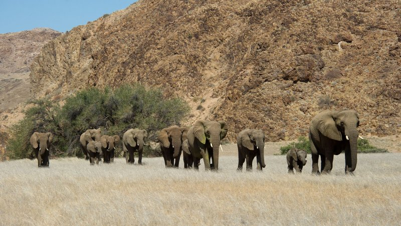 Namibië-doronawas (19)