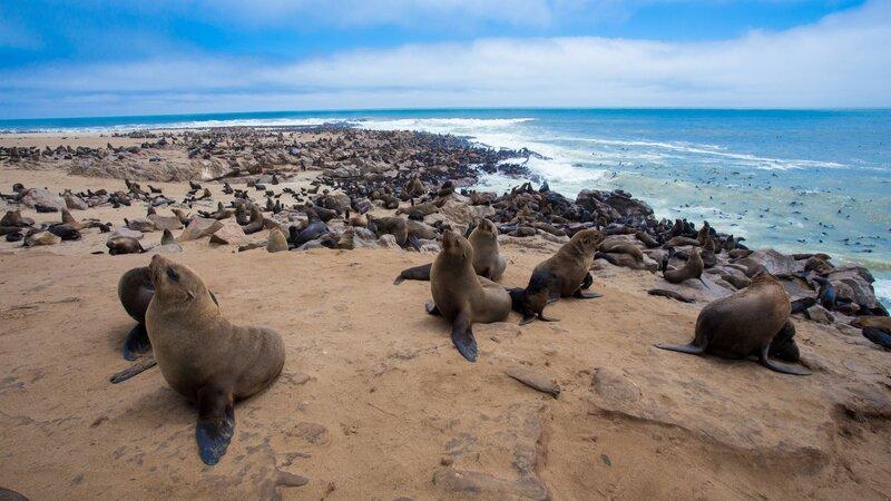 Namibië-Hoogtepunt6-Swakopmund