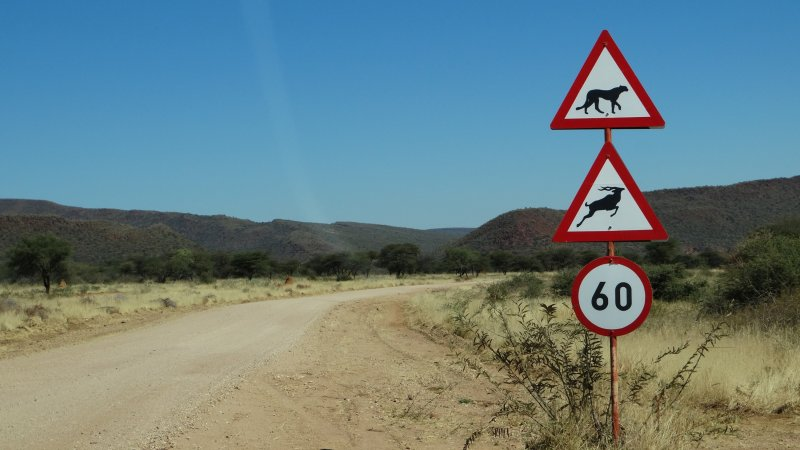 Namibië-okonjima-resized (1)