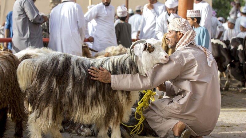 Oman-Nizwa-geitenmarkt