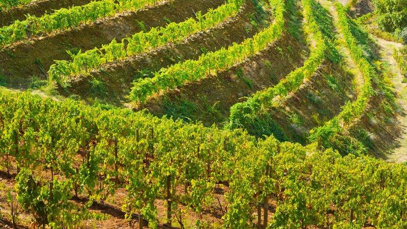 Portugal - Wijn - druiven - Mateus rosé (3)