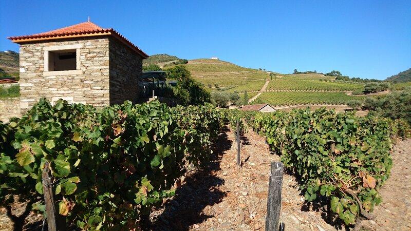 Portugal - Wijn - druiven - Mateus rosé (7)