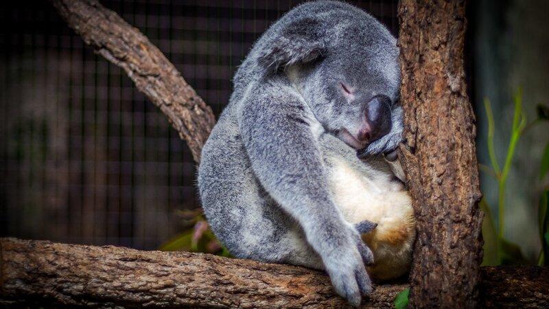 Uitgebreide rondreis door Australië