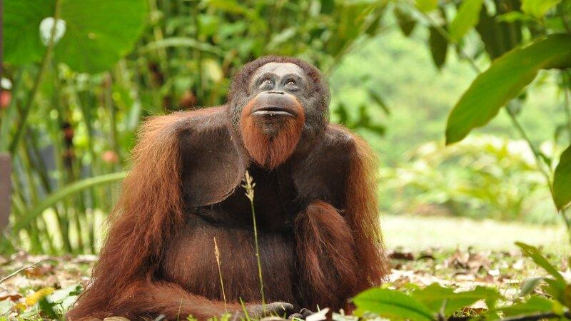 Amazing Borneo met z'n twee