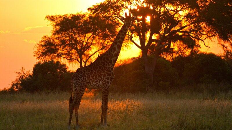 rsz_tanzania-katavi-np-giraffe