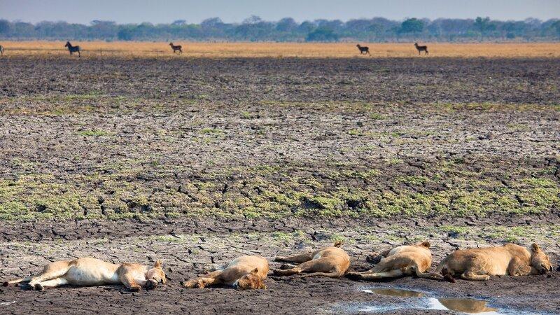 rsz_tanzania-katavi-np-slapende-leeuwen