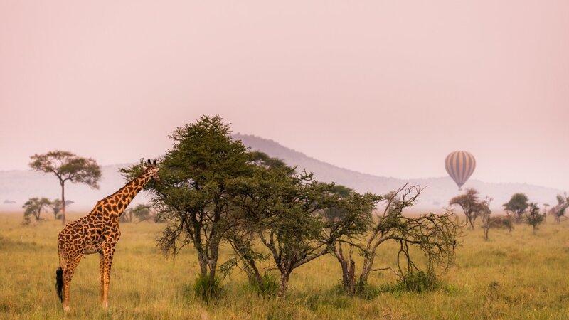 rsz_tanzania-serengeti-excursie-hot-air-ballooning-boven-serengeti_6