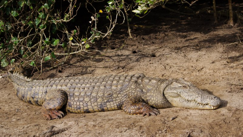 rsz_zuid-afrika-saint-lucia-excursie-hippo-crocodile-boattour-1
