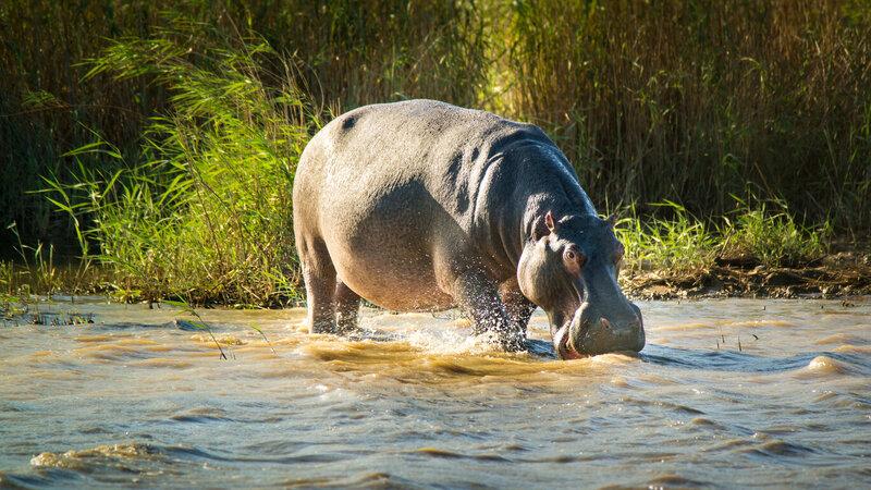 rsz_zuid-afrika-saint-lucia-excursie-hippo-crocodile-boattour-3