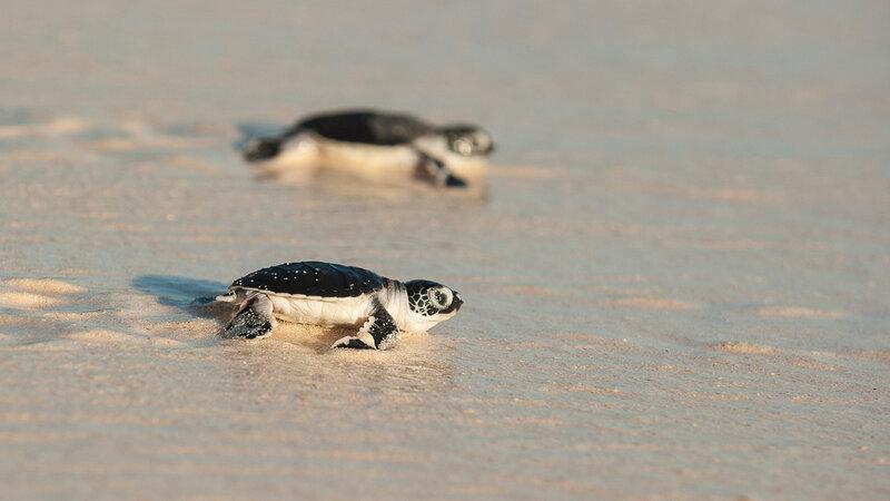 Seychellen-Denis-Island-Excursie-Turtles-hatching-season