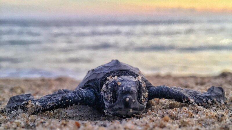 Seychellen-Denis-Island-Excursie-Turtles-hatching-season-mitchel-lensink-unsplash