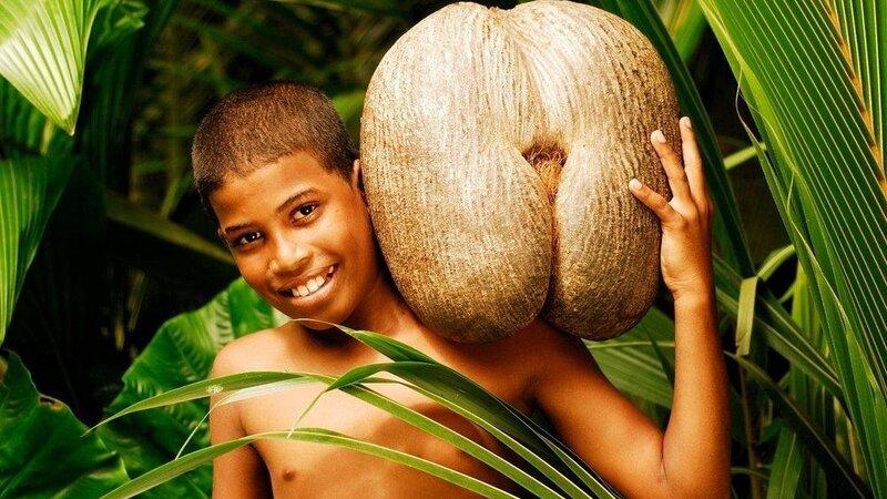 Seychellen-Hoogtepunt3-Praslin coco