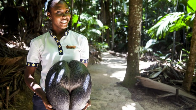 Seychellen-Mahé-Excursie- Enchanted Walk In The Vallee de Mai-3