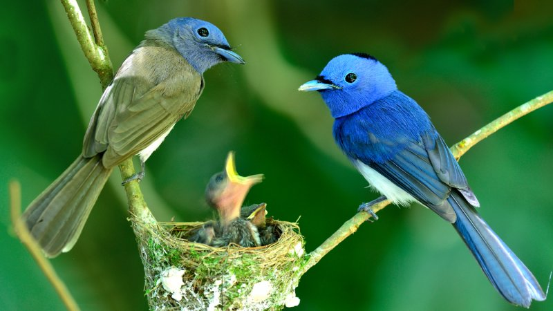 Seychellen-natuurfoto-vogeltjes