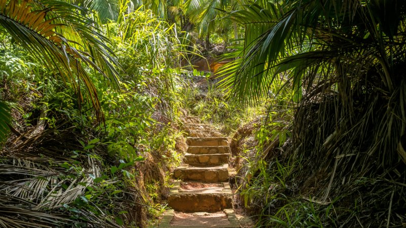 Seychellen-Praslin-Fond-Ferdinand-Nature-Reserve