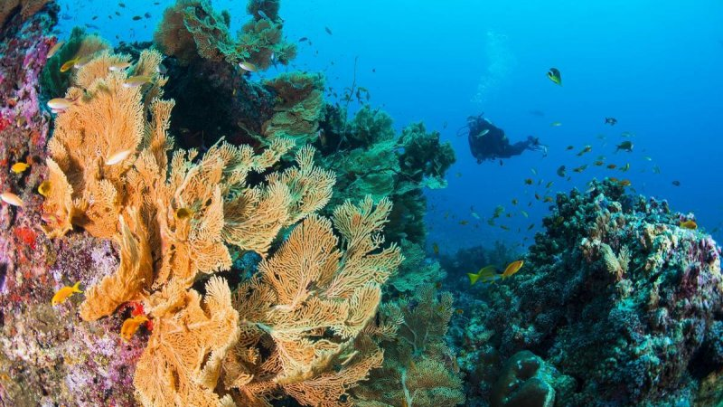 Seychellen-Private-eilanden-BlueSafari-Cosmo-Eco-Camp-onderwaterwereld