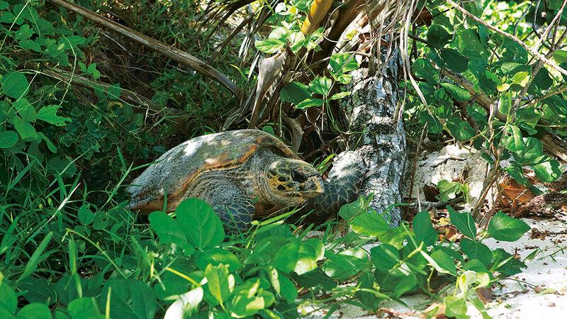 Seychelles-Mahé-Constance Lemuria (23)