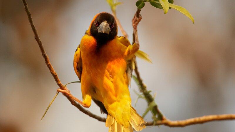 Oeganda-Kibale National Park