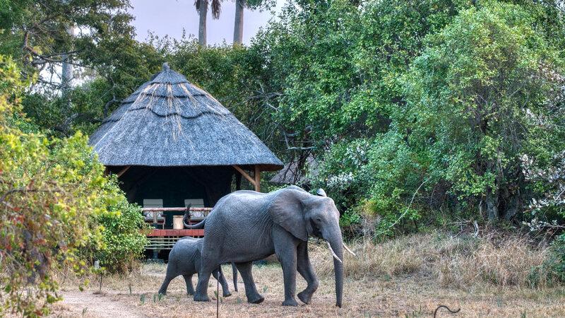 Tanzania-Katavi NP-Mbali-Mbali-Katavi-Lodge-olifant-tent