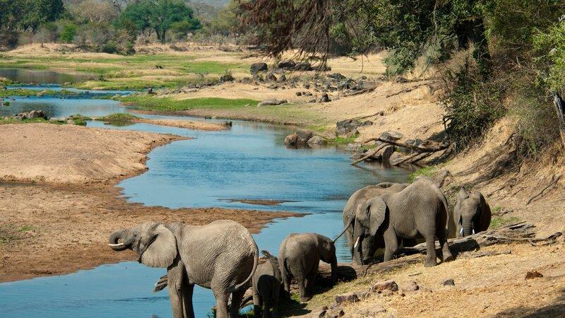 Tanzania-Ruaha NP-olifanten