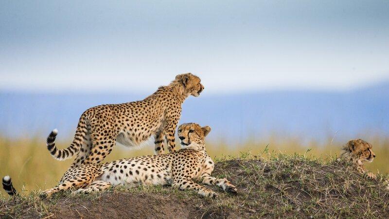 Tanzania-Serengeti-Cheetah2