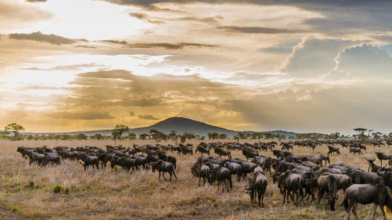 Tanzania-Serengeti-Migratie wildebeest