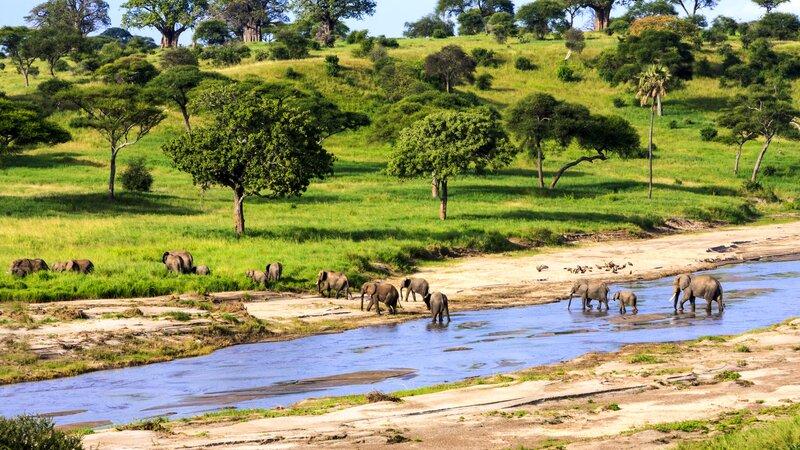Tanzania-Serengeti-olifanten steken over
