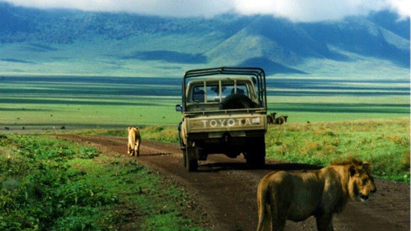 Privé begeleide safari Tanzania en relax in Zanzibar