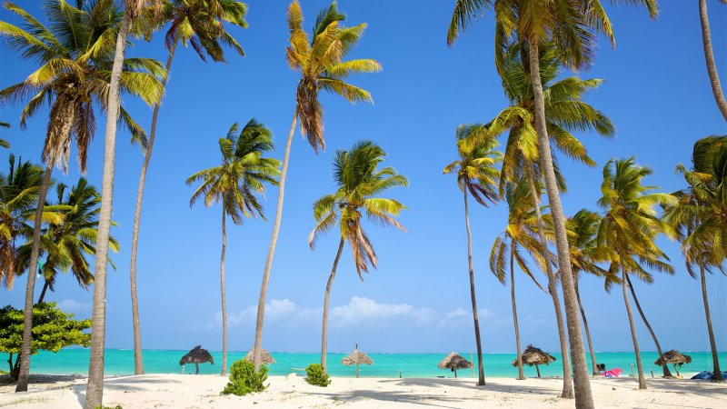 Tanzania-Zanzibar-palmbomen